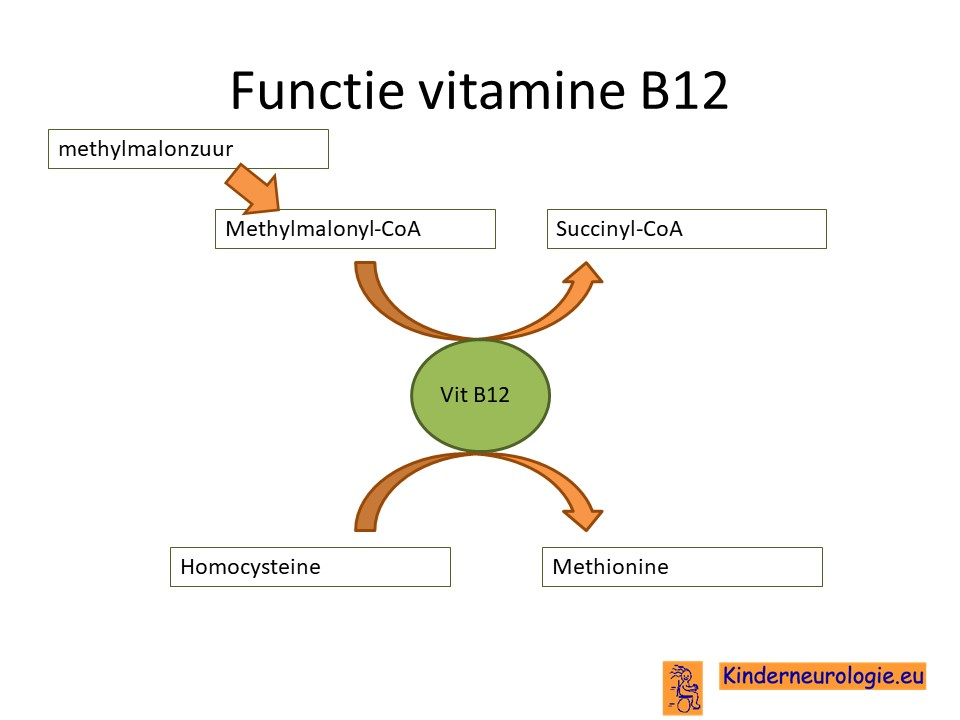 vitamine b12 deficientie