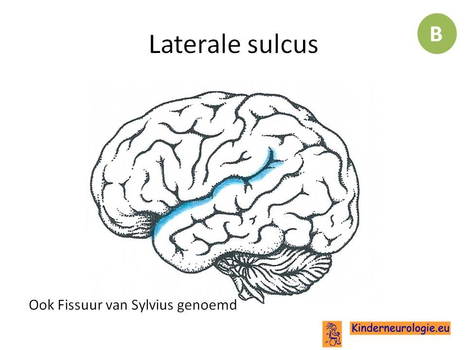 geheugen centrum hersenen