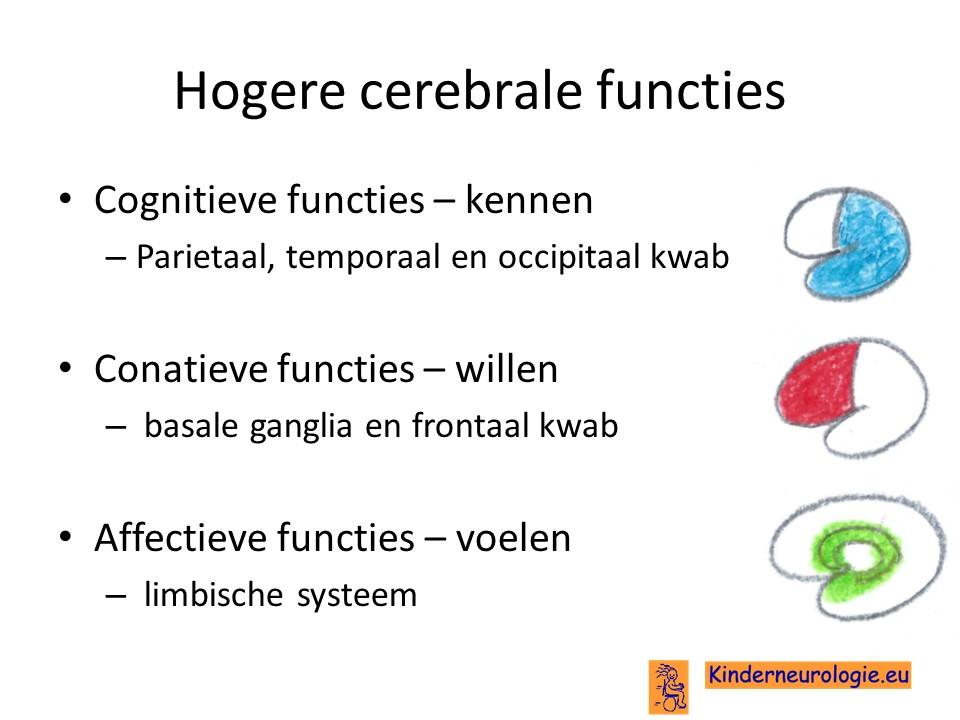 taalcentrum hersenen